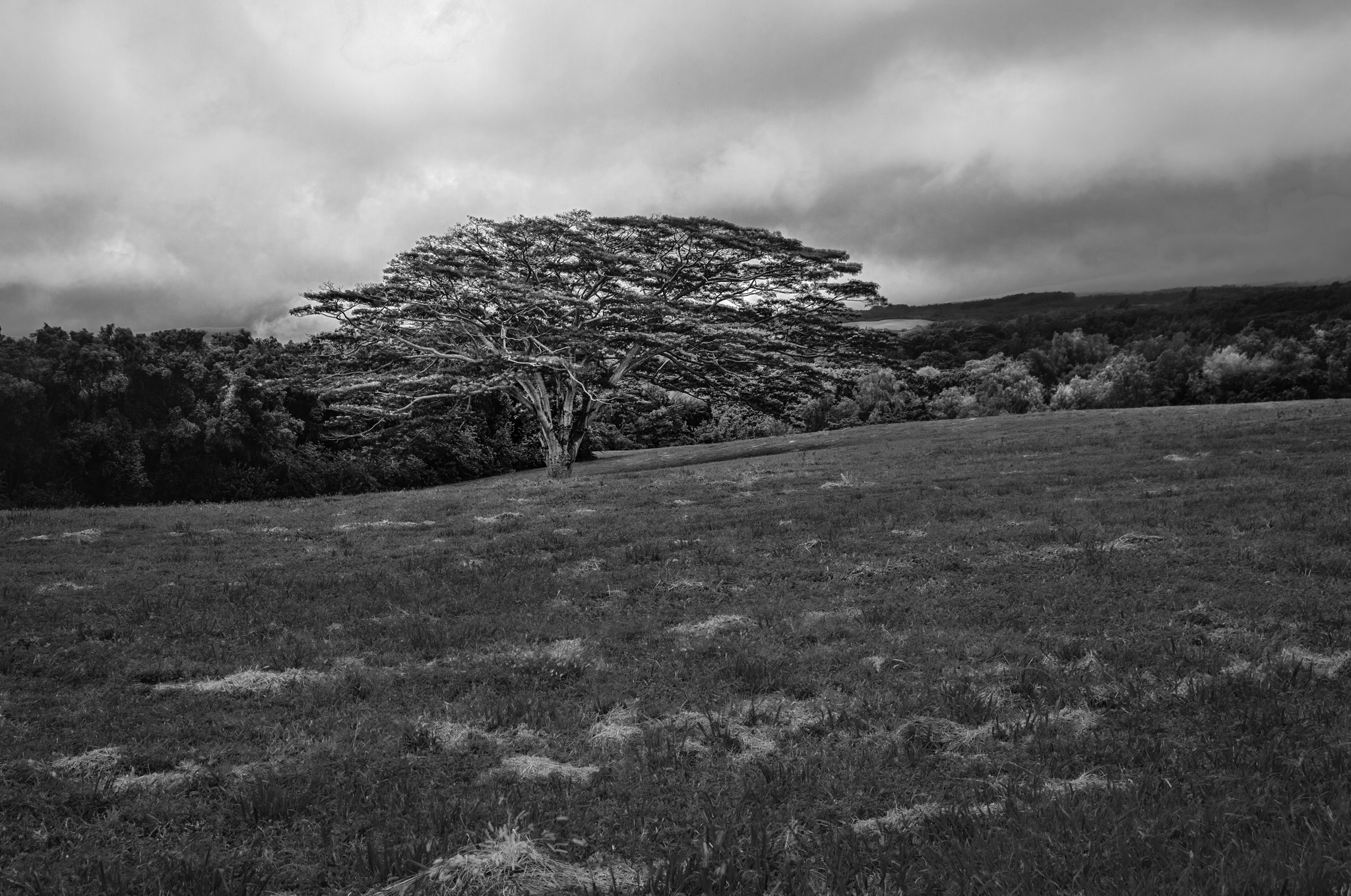 Tree in a Field on Mahukona-Niuli Road - Hawaii - 2009 by Scott Loftesness