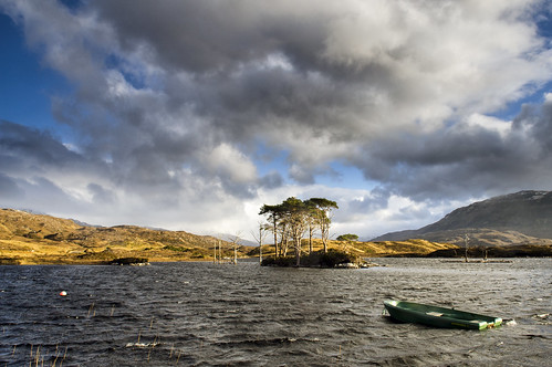 Scots Pines - Loch Assynt