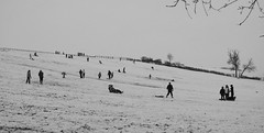 20120119-22_B+W_Toft in the Snow - Sledging