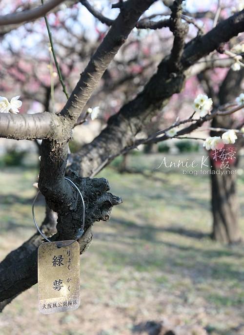 大阪城公園梅林4