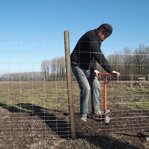 Replantation du saule : coup de tarière