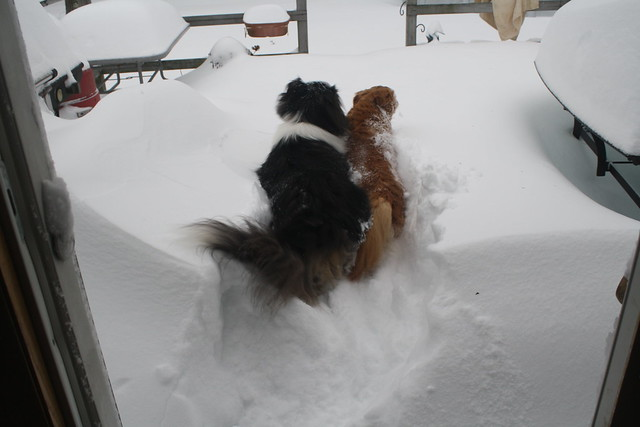 After Nemo: dogs trying to get thru the snow