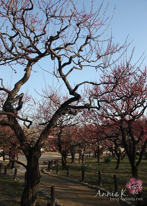 大阪城公園梅林10