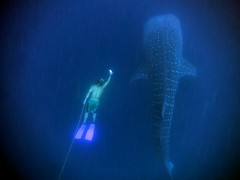Ery and the whaleshark