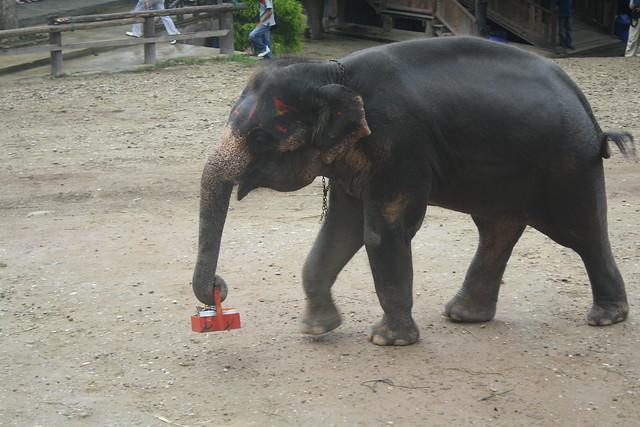 Chiang Mai Elephant Camp Thailand