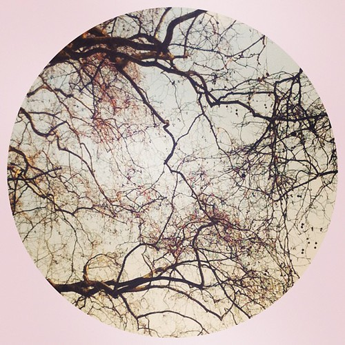 Tree branches look like veins #tree #abstract