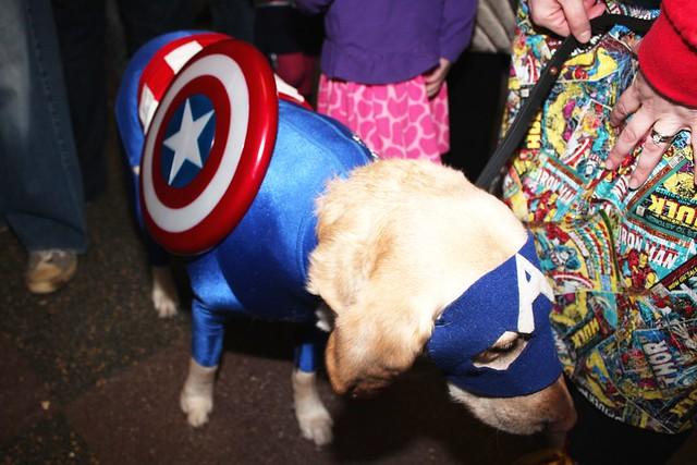 Captain America Dog Cosplay @Asbury Park Comicon 3
