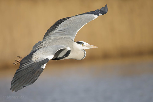Barnes WWT by ShaftInAction