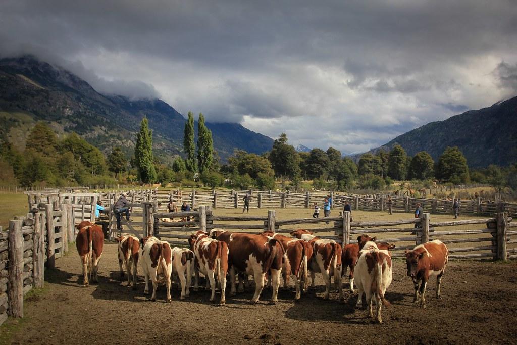 Rancho los Nadis. Baker basin. Aysen, Chile.