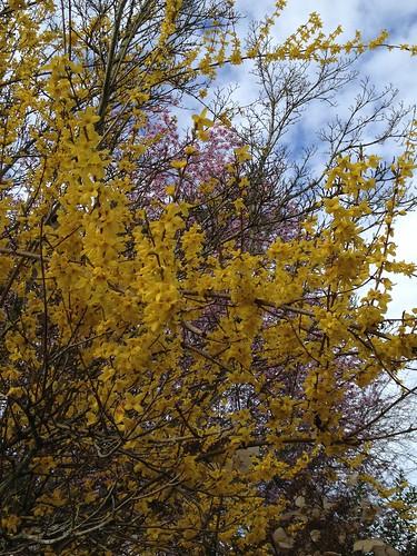 Springtime Kirkland WA by DRheins