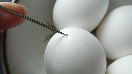 Eggs Benny Two Ways 2