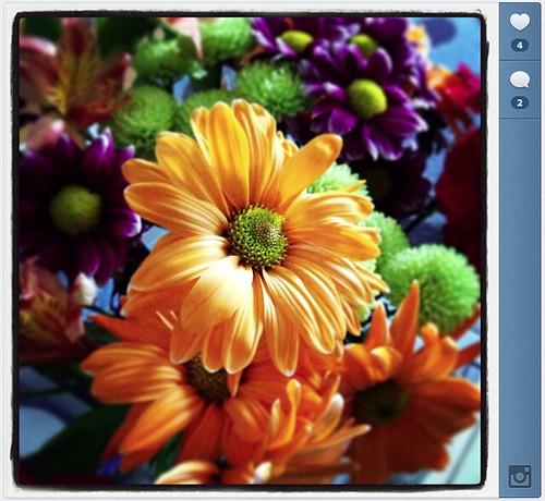 Instagram Shots