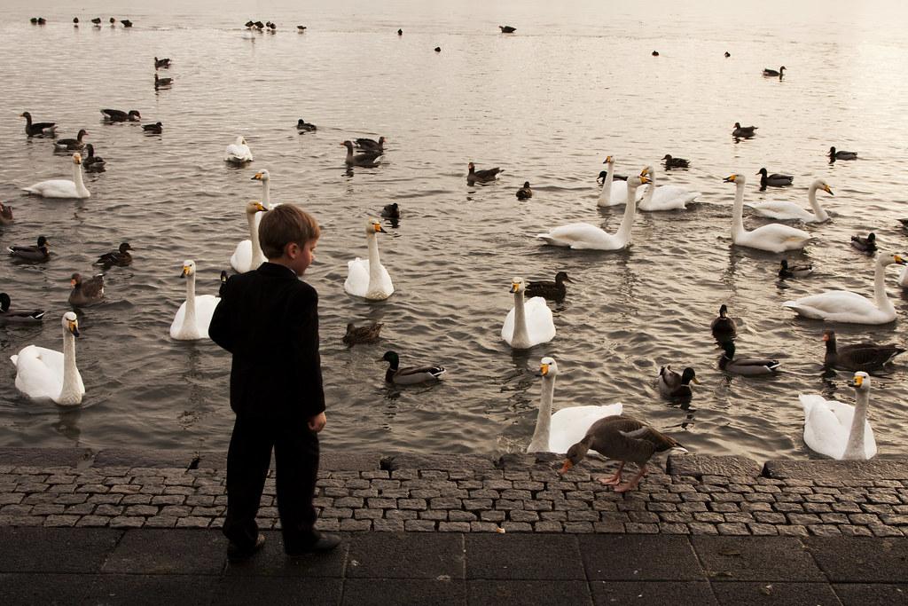 Boy Feeding Birds