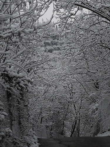 tunnel of snowy trees