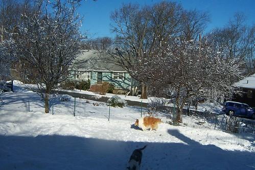 Snowmore0003