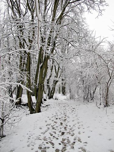Steps in wonderland