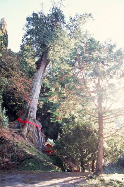 Film: Fujifilm RVP 100. Camera: Nikon FM2. Lens: Nikon AF 24 mm f/2.8D.
