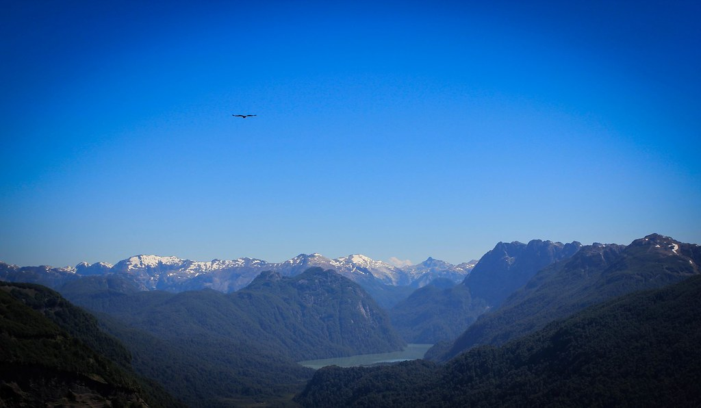 The mighty Andean Condor (wingspan 3m) flying towards Laguna Frias, Argentine Patagonia