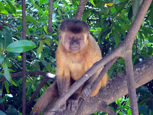 Monkey Watching Human Behavior