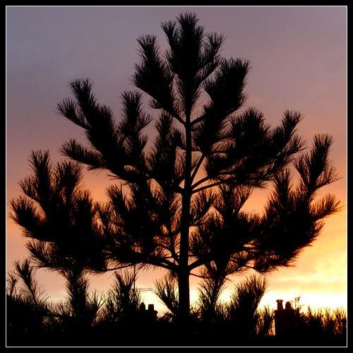 silhouette_xperia