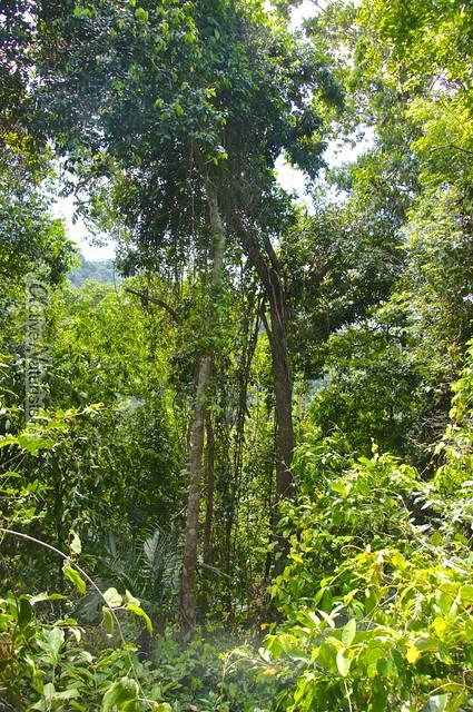 naturist 0016 Palenque, Chiapas, Mexico