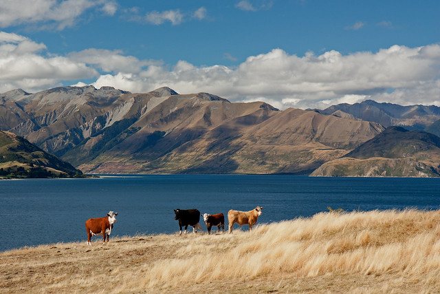 Lake Hawea