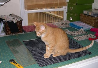 Silly kitty, don't sit on chicken wire (fabric)!