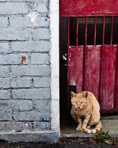 Cat by a Gate