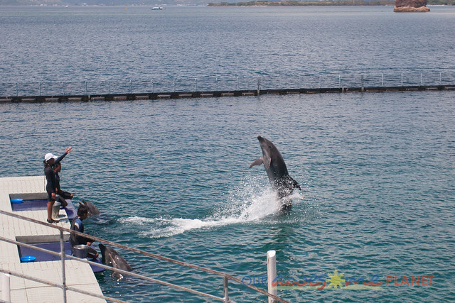 Dolphin and Whale Show-9.jpg