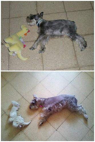 Antes y después by Dott