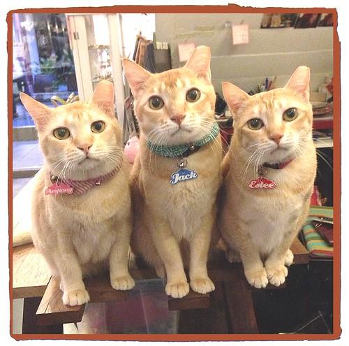 Trio2