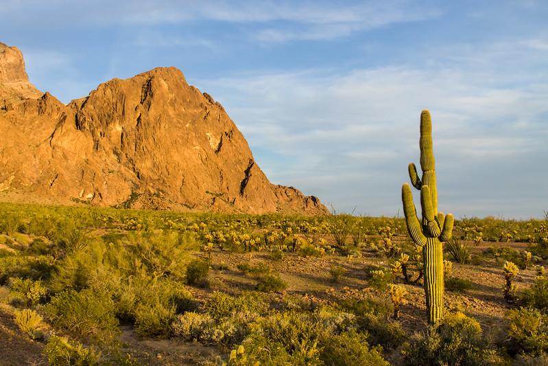 Desert Classic.