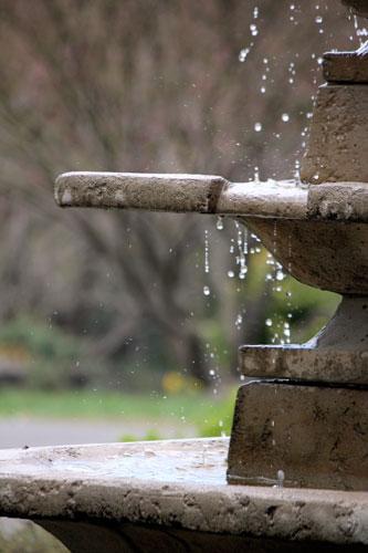 fountain, meadowlark botanical gardens