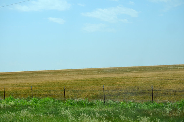 Wheat in Snyder area