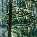 Moss Tree D7K_4705F