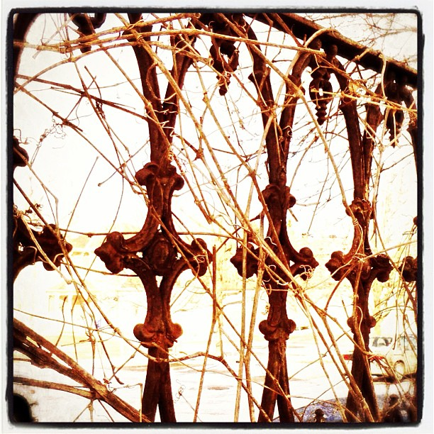 Apr 11 - detail {old overgrown fencing in Picton} #fmsphotoaday #picton #princeedwardcounty #rusty