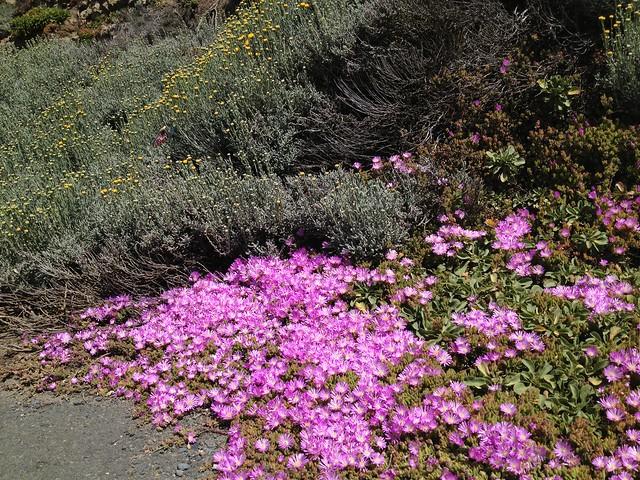 Colorful coastal plants