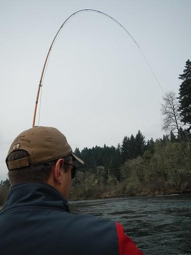 Fish On!  Lower McKenzie Rier