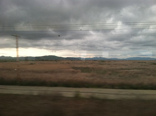 Brown grass going north on Amtrak