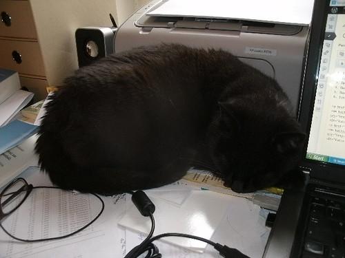 Lena auf dem Schreibtisch