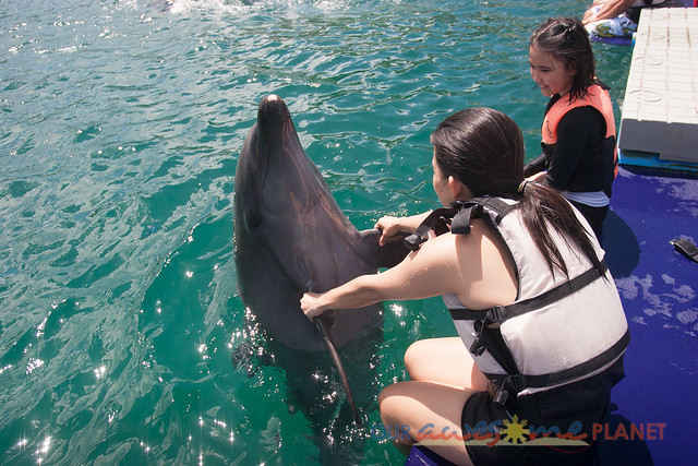Swim Encounter with Dolphin-17.jpg