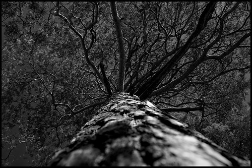 Tree by Davidap2009