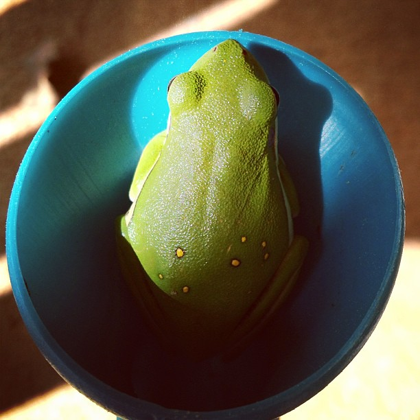 This little guy likes to hang out in the spout of my watering can.