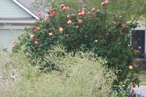 Rosette Delizy and Bamboo Muhly