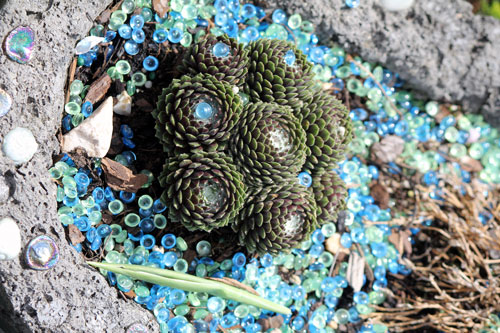 beads in a pot of cactus: meadowlark botanical gardens