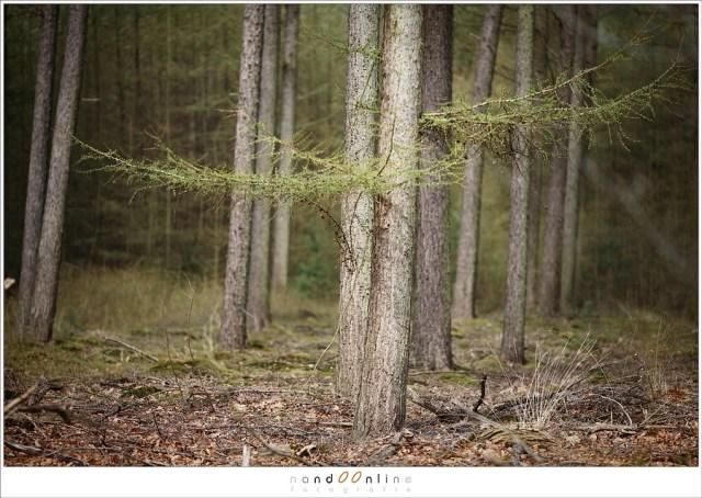 Geen zonlicht in het bos