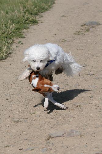 20130423 Flying ninjakick pup