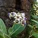 Ghodbunder Fort - Wild Flowers