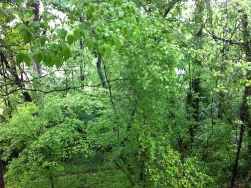 My rain forest
