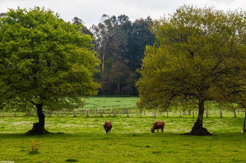 Camino de Santiago Galicia Wald l4l